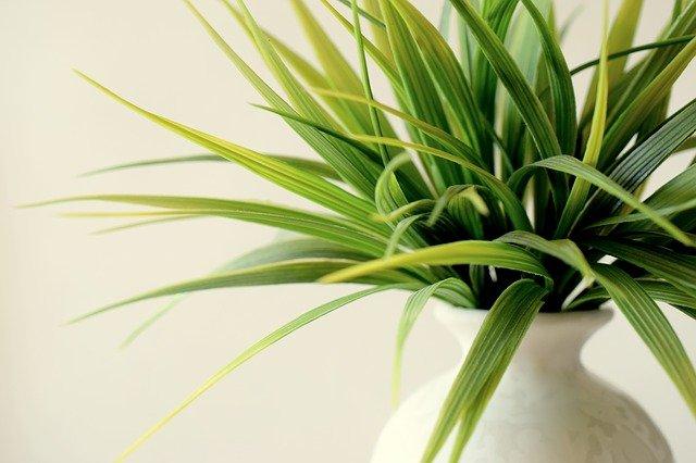 צמחיה מלאכותית – צמחיה שלא נובלת לעולם!